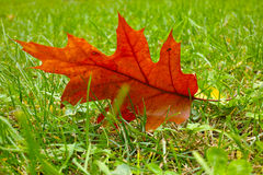 Leaf on the Grass Stock Photo
