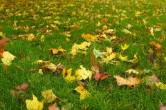 Leaf, Grass, Yellow, Ecosystem royalty free stock images