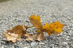 Leaf on gravel Stock Photo