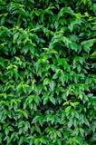 Leaf. Green leaf of background Stock Image