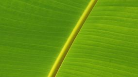 Leaf, Green, Banana Leaf, Plant Stock Photo
