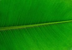 Leaf, Green, Banana Leaf, Plant Stock Photography