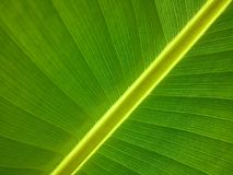 Leaf, Green, Banana Leaf, Plant Royalty Free Stock Image