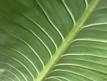 Leaf green bolder background Stock Photos