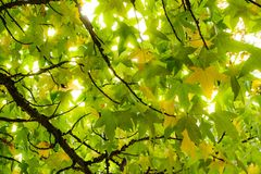 Leaf, Green, Branch, Tree Royalty Free Stock Images