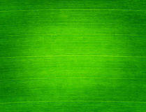 Leaf. Green color on background Stock Photography
