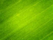 Leaf. Green color on background Royalty Free Stock Photography