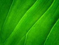 Leaf. Green color on background Stock Photo