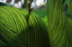Leaf green color nature beauty close-up garden outdoor. Green leaf close-up garden sunlight shadow outdoors Stock Image