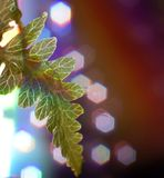 Fern leaf macro close-up bokeh multicolors background light. Leaf green color nature close-up macro blur bokeh background red Stock Photo