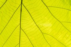 Leaf green of fibers for the background.  stock photography