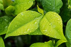Leaf, Green, Foliage, Green Leaves Royalty Free Stock Photos