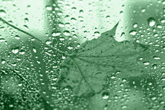 Leaf on Green Glass Stock Images