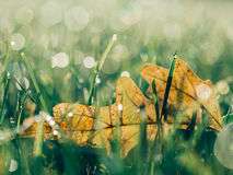 Leaf in green grass Royalty Free Stock Photo