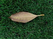Leaf on green grass field. Leaf la down on the ground Royalty Free Stock Photography