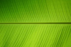 Leaf green grass with light of the sun Stock Image