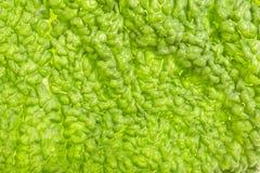 Leaf green natural background Stock Images