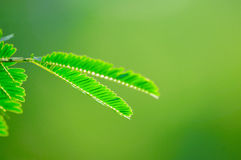 Leaf green nature background Royalty Free Stock Photos