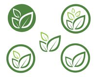 Leaf green nature logo and symbol template Vector Stock Images