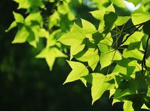 Leaf, Green, Plant, Branch Royalty Free Stock Photos