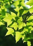 Leaf, Green, Plant, Branch Stock Photo