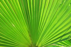 Leaf, Green, Plant, Vegetation Royalty Free Stock Photos