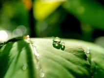 Leaf. Green leaf and rain Stock Photos