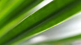 Leaf Green Stripes Stock Photo