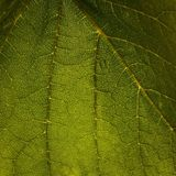 Green Leaf Nature Royalty Free Stock Photography