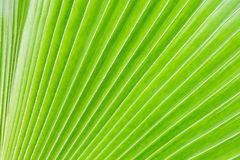 Leaf. Green leaf texture background nature background Stock Photos