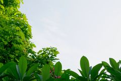 Leaf of green tree under the sky in the morning so fresh air. Leaf of green tree under the sky in the morning so fresh air Stock Photos