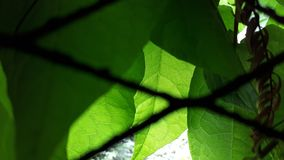 Leaf, Green, Vegetation, Branch royalty free stock photography