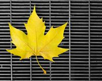 Leaf on grid. Yellow maple leaf on an urban grid. Lonely and sad, but beautiful Royalty Free Stock Photography