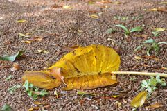 Leaf. A Leaf on the ground Stock Photography