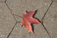 Leaf on the ground. An autumn leaf on the park sidewalk royalty free stock photography