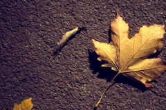 Leaf on the ground. Single chesnut leaf on the ground Royalty Free Stock Image
