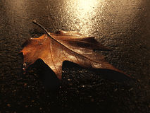 Leaf on the ground. Single chesnut leaf on the ground Stock Image
