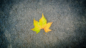 Leaf on the ground. A background with a leaf on the asphalt Stock Image