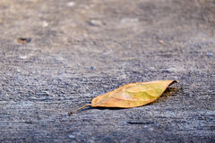 Leaf on ground Royalty Free Stock Photos