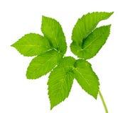 Leaf ground  isolated Royalty Free Stock Image