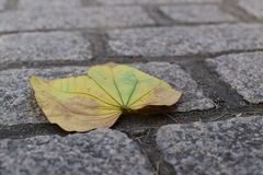 Leaf on the ground royalty free stock photos