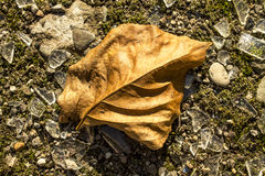 Leaf on the ground Royalty Free Stock Image