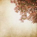 Leaf grunge background,. Beauty of japan leaf with old background design Stock Photos