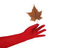 Leaf in a hand Royalty Free Stock Images