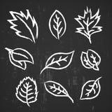 Leaf hand drawn Stock Photo