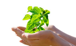 Leaf in hands Royalty Free Stock Photography