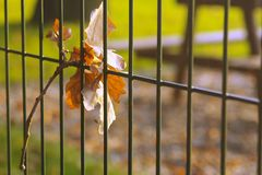 Leaf hanging on the fence Royalty Free Stock Photography