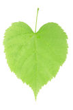 Leaf heart. Heart shaped leaf isolated on white Royalty Free Stock Image