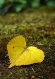 Leaf - heart