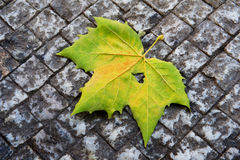 Leaf with heart. On earth Stock Photo